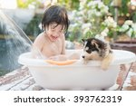 Stock photo cute asian child bathing with siberian husky puppy in the garden on a hot sunny summer day 393762319
