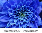Close Up Of Blue Flower   Aste...