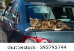 Stock photo cat on the car 393793744