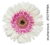 White And Pink Gerbera Flower...