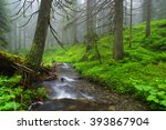 Creek In The Woods And Trees I...