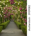 Stock photo passage ornate with roses forming multiple arcs 3939082