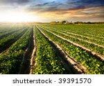 Cultivated Land In A Rural...