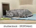 cat and notebook. cat sitting... | Shutterstock . vector #393954661