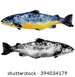 salmon  watercolor | Shutterstock . vector #394034179