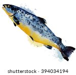 atlantic salmon salmo solar... | Shutterstock . vector #394034194