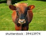 Grazing cow - stock photo