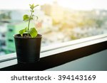 growing plants in little black... | Shutterstock . vector #394143169