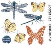 Stock vector hand drawn dragonflies and butterflies set 394152007