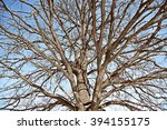 The Bare Branches Of The Oak....