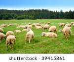 Herd Of Sheep On Green Meadow
