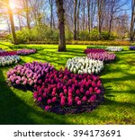 Spring Sunrise In Keukenhof...