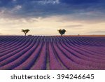 beautiful colors purple... | Shutterstock . vector #394246645