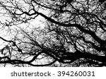 Curly Branches Of Trees
