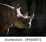 Eastern Black Rhinoceros...