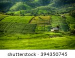 Rice Fields With Fog On Terraced