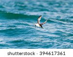 atlantic puffin in motion... | Shutterstock . vector #394617361