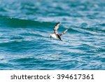 atlantic puffin in motion...   Shutterstock . vector #394617361