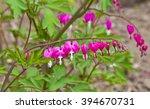 Violet Flowers  Pink Flowers I...