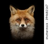 Red Fox Face Isolated On Black...
