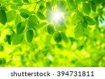 green leaves on the green... | Shutterstock . vector #394731811
