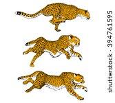 Cheetahs. Set Of Three Colored...