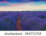 beautiful colors purple... | Shutterstock . vector #394771729