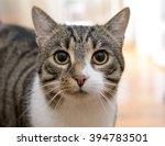 portrait of domestic tabby coat ... | Shutterstock . vector #394783501