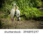 two storks nuzzle among ferns | Shutterstock . vector #394895197
