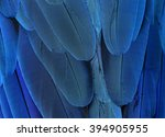 The Exotic Blue Background  Th...