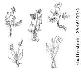 vector wild plants with roots ... | Shutterstock .eps vector #394914475