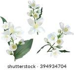illustration with jasmine... | Shutterstock .eps vector #394934704