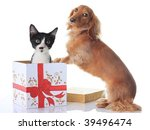 Stock photo puppy and kitten and the christmas present 39496474