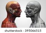 human anatomy   muscle anatomy... | Shutterstock . vector #395066515