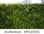 A Living Green Planted Wall ...