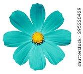 Turquoise Flower Primula...