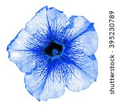 Small photo of Blue althea flower macro isolated on white