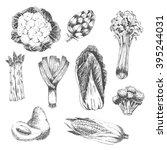 vector vegetable hand drawn...   Shutterstock .eps vector #395244031