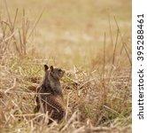 ground squirrel sitting at the... | Shutterstock . vector #395288461