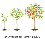 growth cycle from seedling to... | Shutterstock .eps vector #395415379