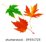 leafs isolated on white... | Shutterstock . vector #39551725