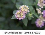 pink flowers on  blurred... | Shutterstock . vector #395557639