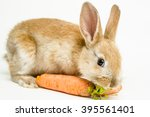 Stock photo cute red baby easter rabbit eating carrot on white background 395561401