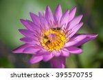 ee pollen eating lotus | Shutterstock . vector #395570755