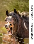 Funny Laughing Brown Horse Wit...