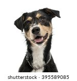 Stock photo close up of a cross breed dog looking at the camera and sticking his tongue out isolated on white 395589085