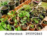 Many Fresh Vegetables In Pot