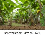 Banana Tree Farm In Rural Of...