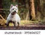 cute white west highland... | Shutterstock . vector #395606527