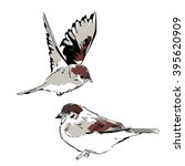 Sparrow Birds Sketch Backgroun...